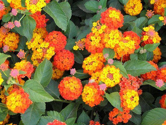 M s de 1000 ideas sobre jard n a pleno sol en pinterest - Plantas para jardineras al sol ...