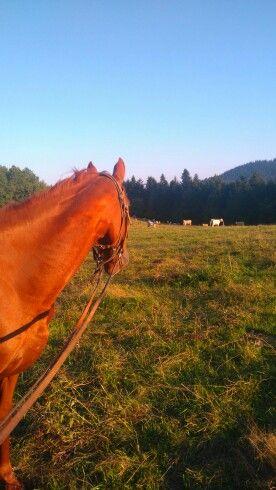 Prechádzka na koni