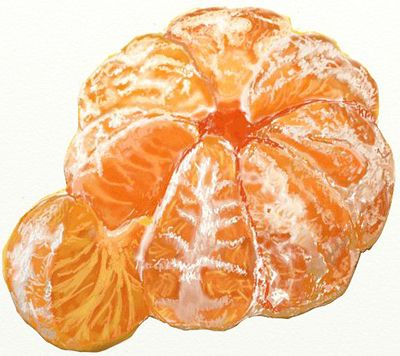 Realistic peeled orange - coloured pencil
