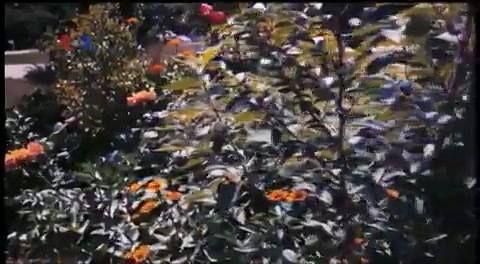 Munculnya pejuang lanskap pangan menawarkan peluang bagi setiap orang untuk menanam dan memakan pangan organik. Pelopornya, Brie Arthur, memperlihatkan kepada warga negara bagian Maryland, bagaimana menanam tumbuhan pangan, berdampingan dengan tanaman bunga dan semak-semak.  Di YouTube:  https://youtu.be/r3pWJoOyeMw