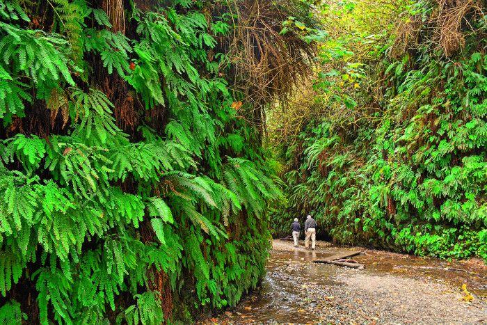 11. Fern Valley Trail