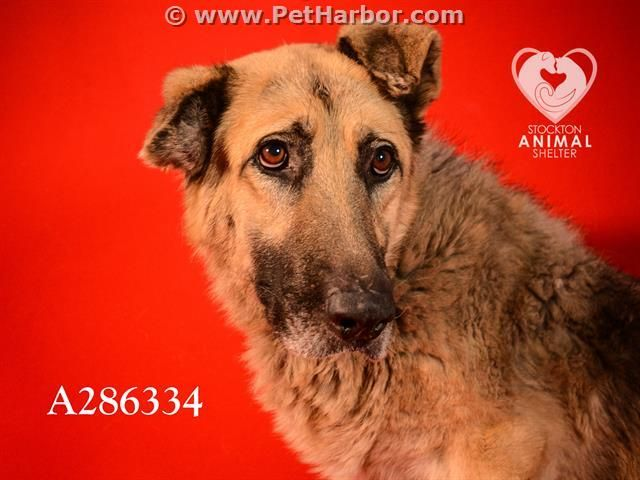 Petharbor Com Animal Shelter Adopt A Pet Dogs Cats Puppies