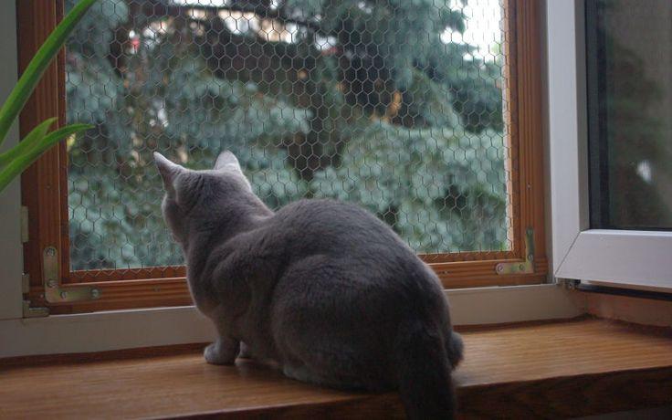Osiatkuj balkon i okna, bo kot wypadnie!