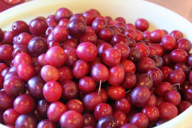 Wild Plum Jelly Recipe How To Can Your Own! - Must Have Mom