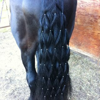 Diamond braided horse tail...also gonna do this to Popcorn!!! XD