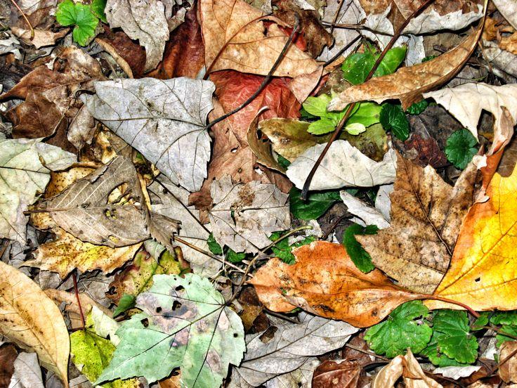 Leaves. #johnbogeman2 #autumn #fall