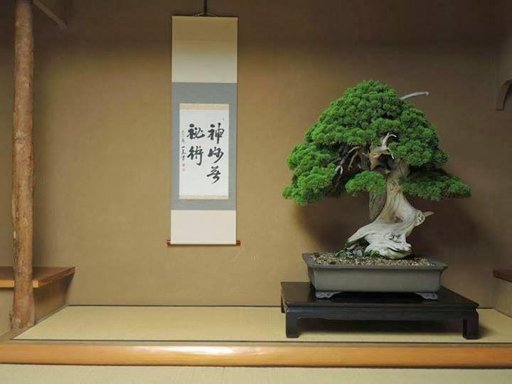 bonsai tree by Kunio Kobayashi,  Tokyo Japan. Roughly 13-14th century.