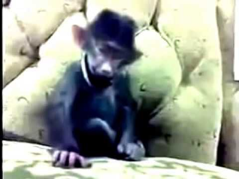 MONKEY CHILD LAUGH SO FUNNY laughable