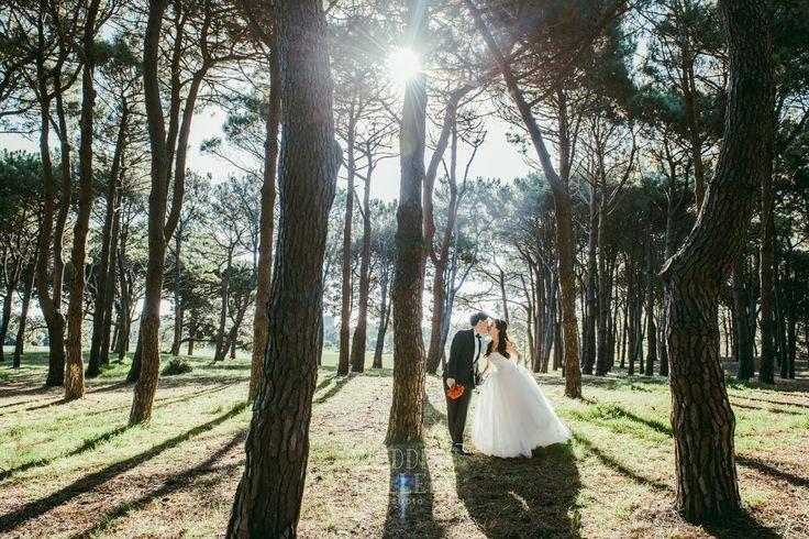 weddinggallery.net.au_The best Sydney wedding photography_weddinggallery.net.au_The best Sydney wedding photography_5