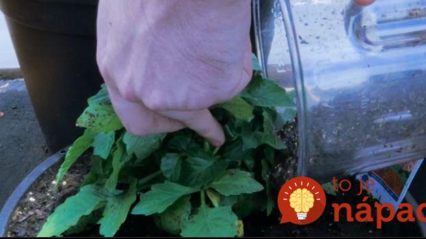 Najúčinnejšie hnojivo pre vaše rastlinky? Celý čas ho máte pod nosom!  Návod, ako ho pripraviť nájdete tu: http://tojenapad.dobrenoviny.sk/najucinnejsie-hnojivo-pre-vase-rastlinky-cely-cas-ho-mate-pod-nosom/ #grow #plants #homemade #chemicalfree #fast #easy #scarps