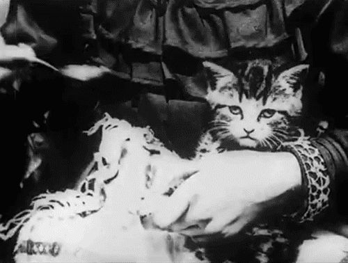 """boyexemplified:  turnedblueintime:the first ever 'close-up' shot, in all of film history, was used on a cat, in the 1903 film """"A Sick Kitten""""  cat videos have a long and grand history"""
