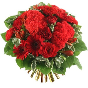 48 best fleurs rouges images on pinterest   red flowers, beautiful