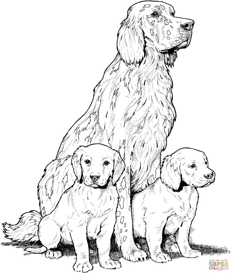 Nice Thrill Murray Coloring Book 90 Labrador with Puppies Super