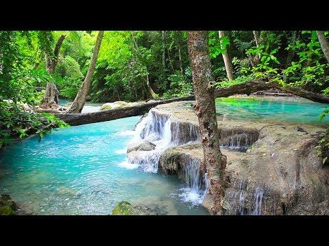 Birds Singing Waterfall Jungle Sounds Relaxing Tropical