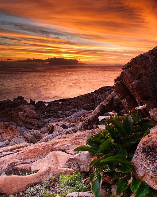 Taken near the mouth of the Steenbras River - close to Gordon's Bay, Western Cape, South Africa.