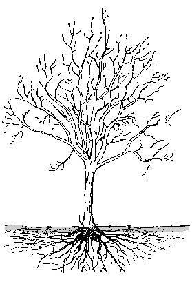 a fa r szei bra Google keres s k psorok k rnyezethez
