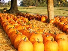 Boyd's Pumpkin Patch - Clarksville, TN This Fall! ---Go on over to another Clarksville Tradition ,The Old Mercantile a family business since 1987---260 B Needmore Rd in Clarksville Tn and get a cup of Cidar to sip on. Facebook---931-552-0910