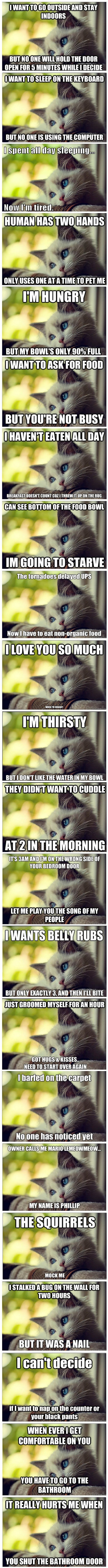 Best Of First-World Cat Problems