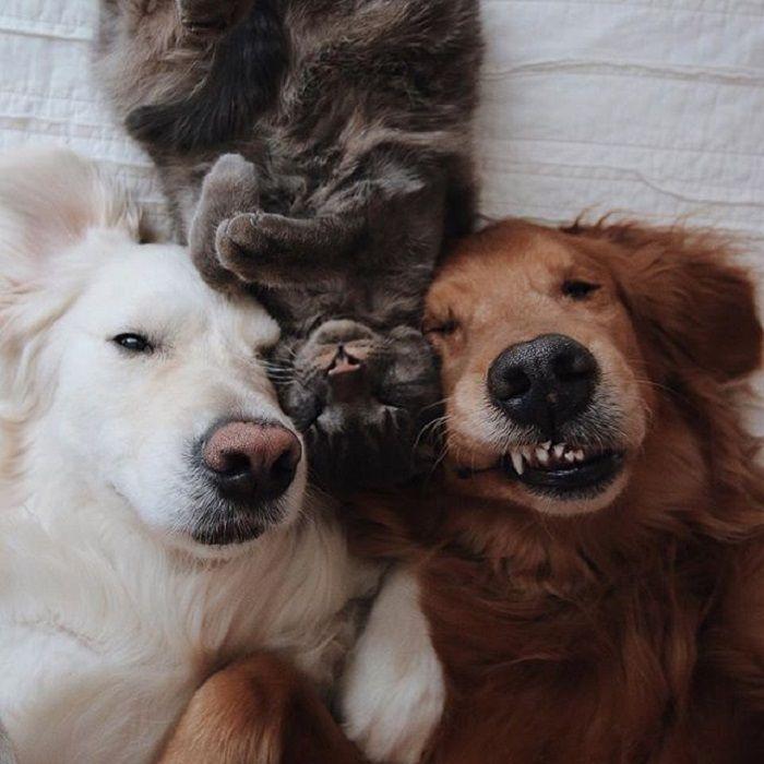 Картинки три друга животные