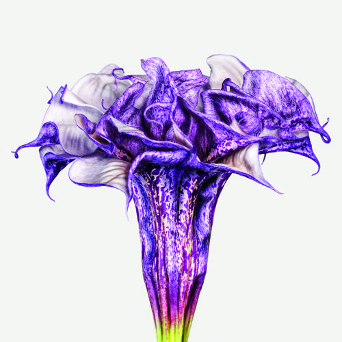 Blossoms like you've never seen them before. Andrew Zuckerman's Extraordinary Portraits of Flowers  via the wonderful Brain Pickings.