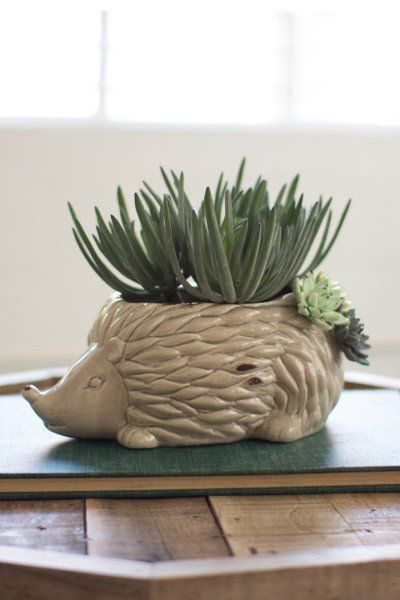 "Ceramic hedgehog planter with ceramic succulent accents attached near tail. (Plants not included.) Dimensions: 10.5""L x 6.5""W x 5""H"