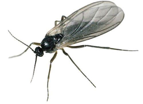 Chaque année, il revient plus ou moins coriace. Il pourrait détenir la palme de l'insecte le plus agaçant. Il est la plaie de nos barbecues sur la terrasse et de nos après-midi au jardin. Il s'agit, bien entendu, du moustique.