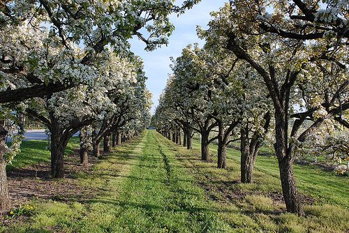 Beautiful #Orchard in #Summerland #BC