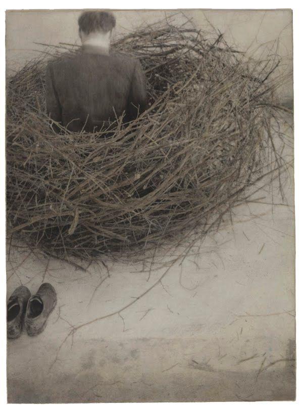 Robert & Shana ParkeHarrison Study of Nest ...