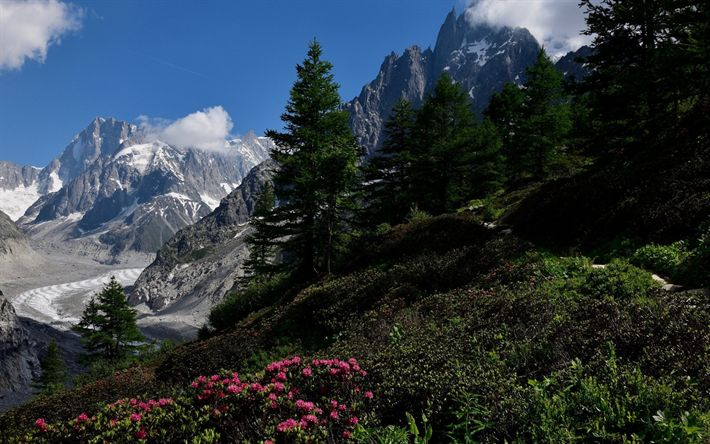 Download wallpapers mountain landscape, forest, glacier, mountain flowers, green grass, snow