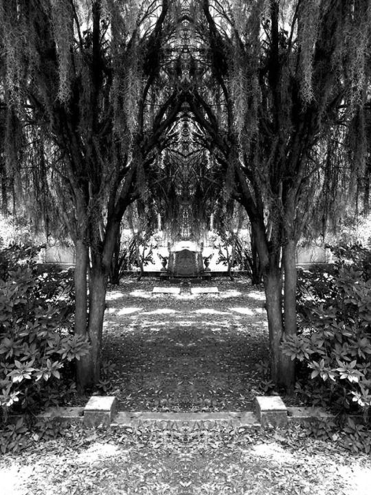 Bonaventure Cemetery in Savannah GA   Photography submitted by Elizabeth Brizuela