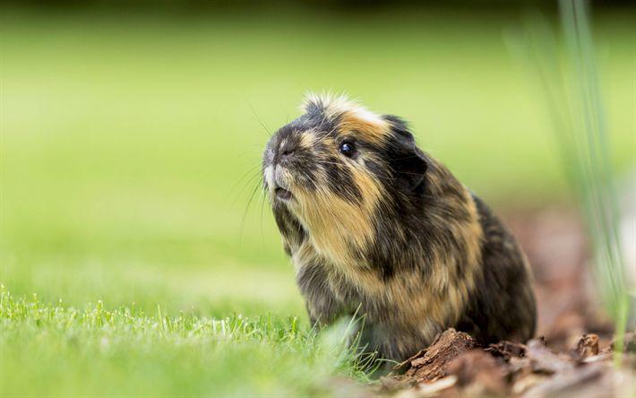 Download Wallpapers Download 2790x2547 Animals Grass: Best 25+ Pig Wallpaper Ideas On Pinterest