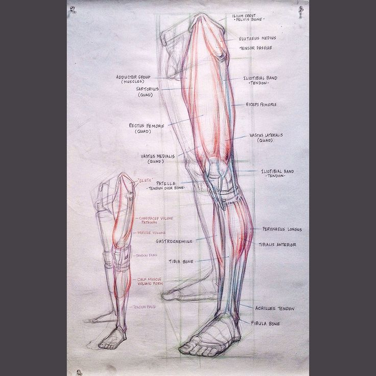The 167 best FIGURE LEG Anatomy-Bone and Muscle images on Pinterest ...