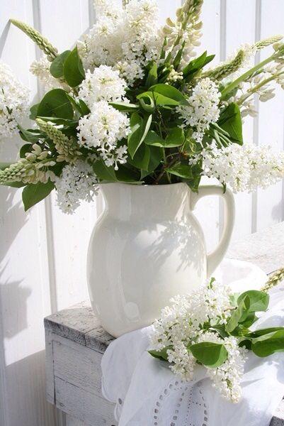 Lilas blancs