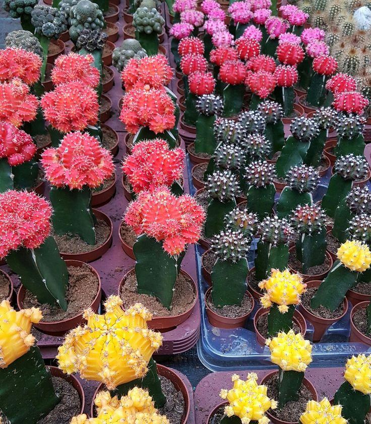 Kijk nou wat mooi!!!Ik zag al die kleuren en dacht dit moet ik met de Yoorsianen delen!