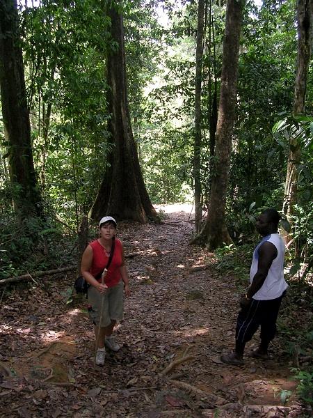 Brownsberg, Suriname. Prachtige ongereptheid, maar overal loert het gevaar van industriële ontwikkeling zonder oog voor het kwetsbare primaire oerwoud.