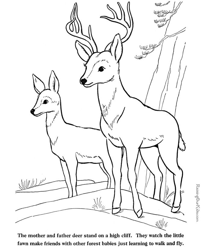 These Free Printable Deer And Fawn Coloring Pages Of Farm Animals Provide Hours Online At Home Fun For Kids