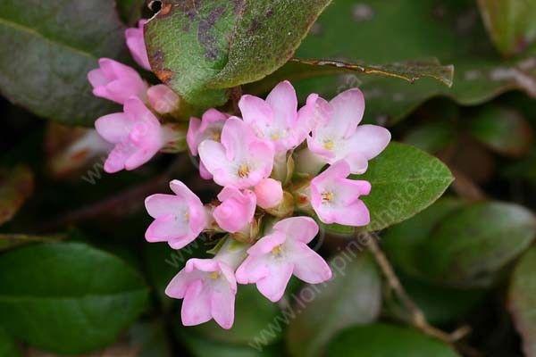 nova scotia mayflower