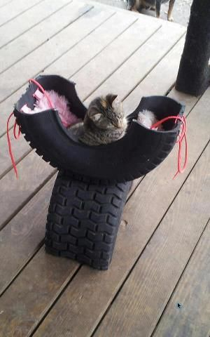 Here kitty, kitty.  Turn an old tire into a kitty retreat, cut in half, bolt together.  Visit us: http://whenthedinnerbellrings.blogspot.com/ or https://www.facebook.com/groups/blogthebell/