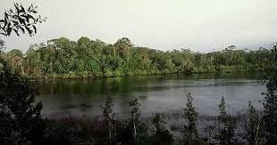 Muchos árboles y arbustos caducifolios florecen durante el período en que no tienen hojas. caducifolio hace referencia a los árboles o arbustos que pierden ...