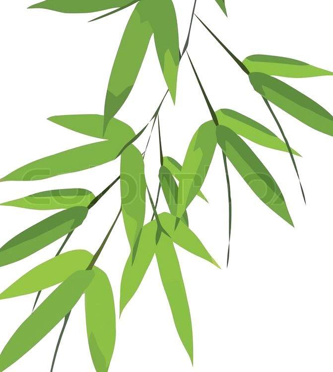 Bamboo Leaves Vector Vector Colourbox Bamboo Leaves Leaf Art Bamboo Art