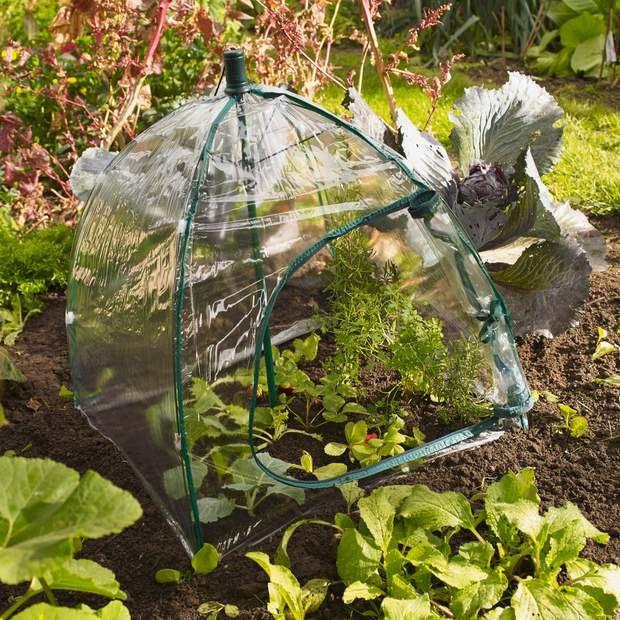 Serre De Jardin Petite Pas Chere De Balcon Notre Selection Serre Jardin Petite Serre Serre