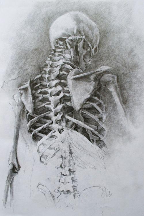 (1) Tumblr   Art   Pinterest   Anatomy