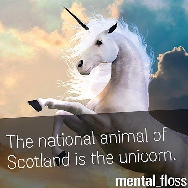 The national animal of Scotland is the unicorn.  http://ift.tt/1QRM1qW