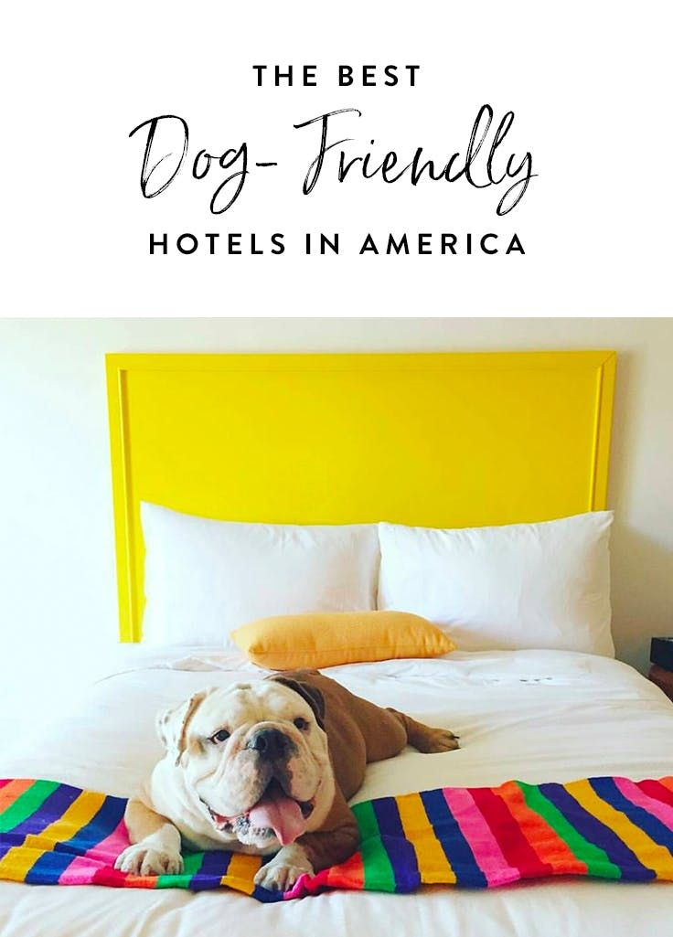 The Best Dog Friendly Hotels In America