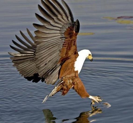 foto galeri,fotoğraf,dünya,hayvanlar alemi,yırtıcı kuşlar, 19