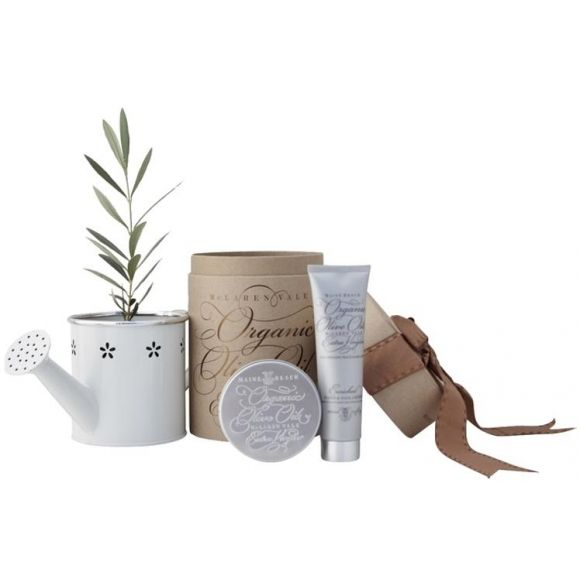 The olive tree and olive oil gift set