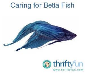 betta fish care guide pdf