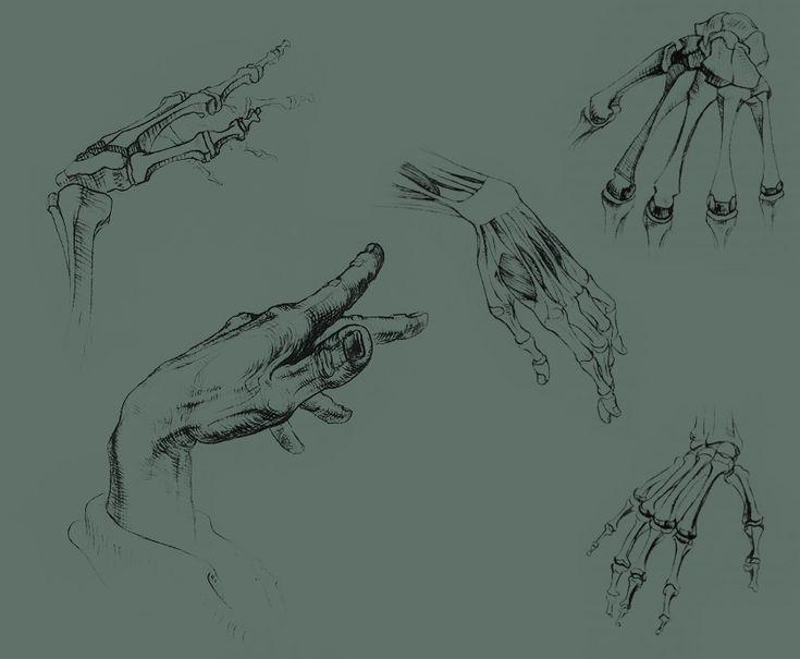 художественная анатомия человека - Поиск в Google