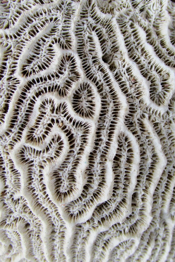 Coral inspiration. Perhaps include some coral photography?