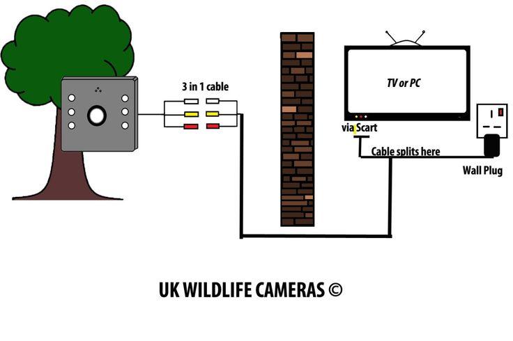 Wildlife Camera(Wired  Vs. Wireless)